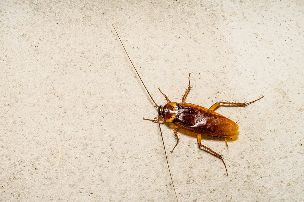 Cockroach Control, Pest Control in Kingston upon Thames, KT1. Call Now 020 8166 9746