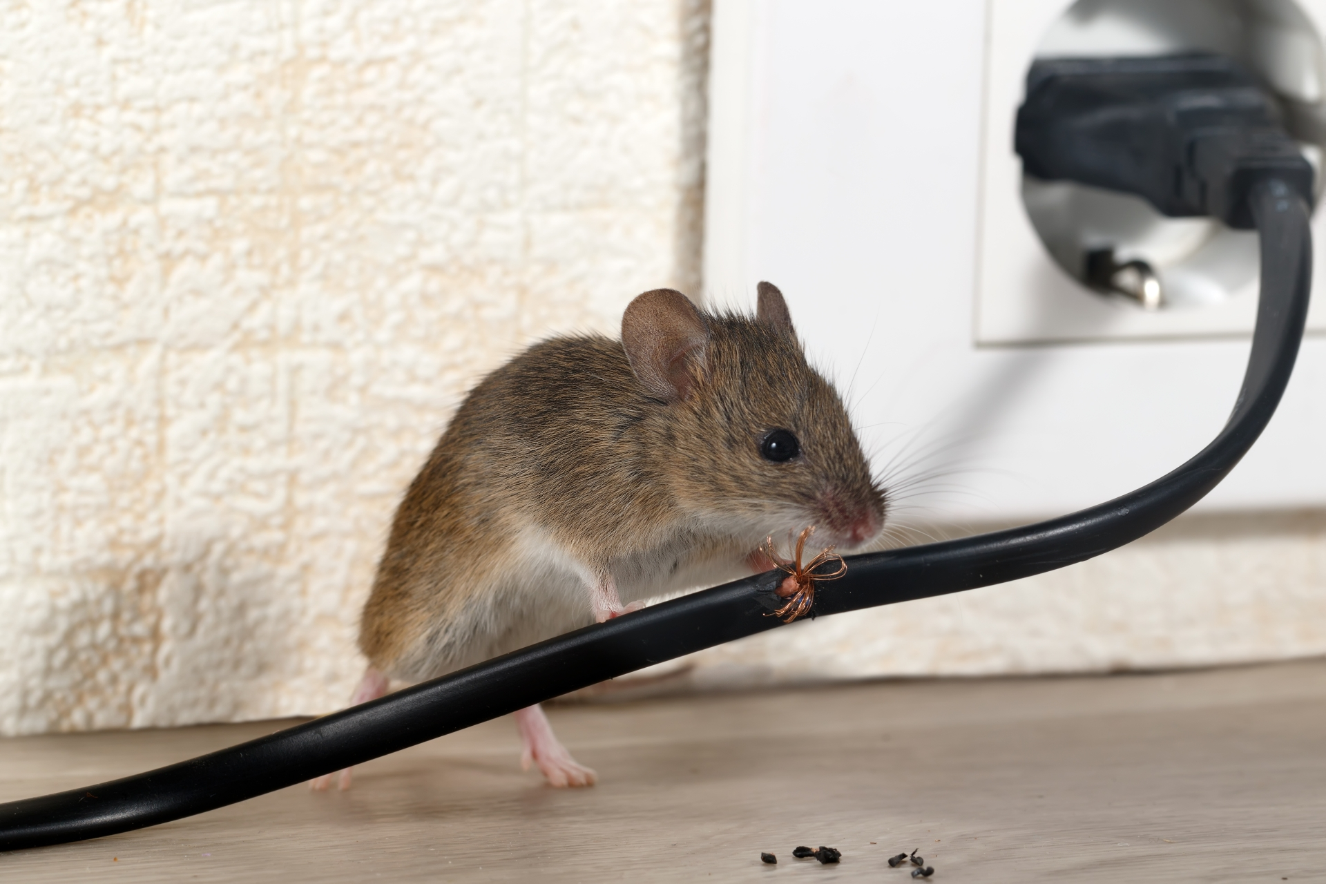 Mice Infestation, Pest Control in Kingston upon Thames, KT1. Call Now 020 8166 9746